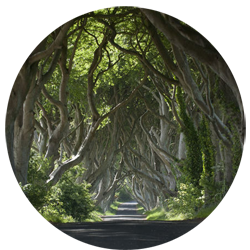The King's Road is shot at Antrim's Dark Hedges