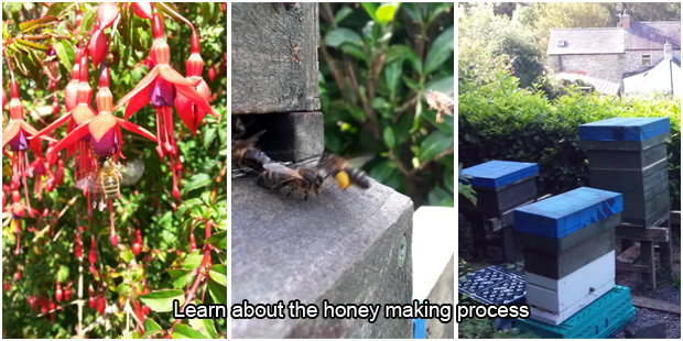There's a buzz about Honey Bee Cottage
